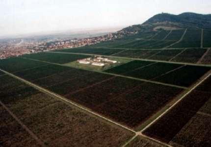 N1: Vršački vinogradi u stečaju, ali vino teče