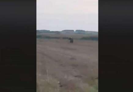 Snimljen medved u okolini Vršca (VIDEO)